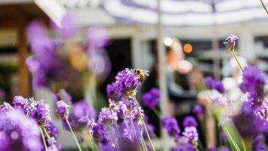 Photo of Geniet van jouw tuin in de zomer van 2021!