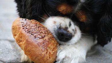 Photo of 5 Redenen om te kiezen voor hondenvoer op basis van insecten